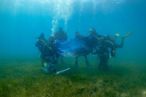 菲律賓SDI潛水