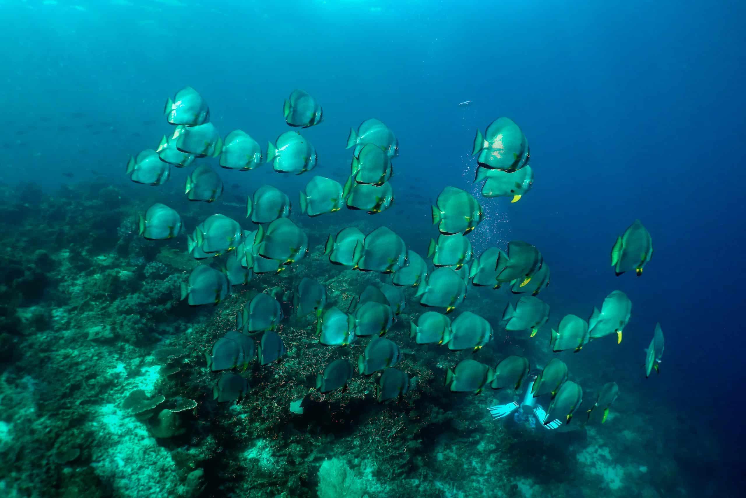 四皇島潛水